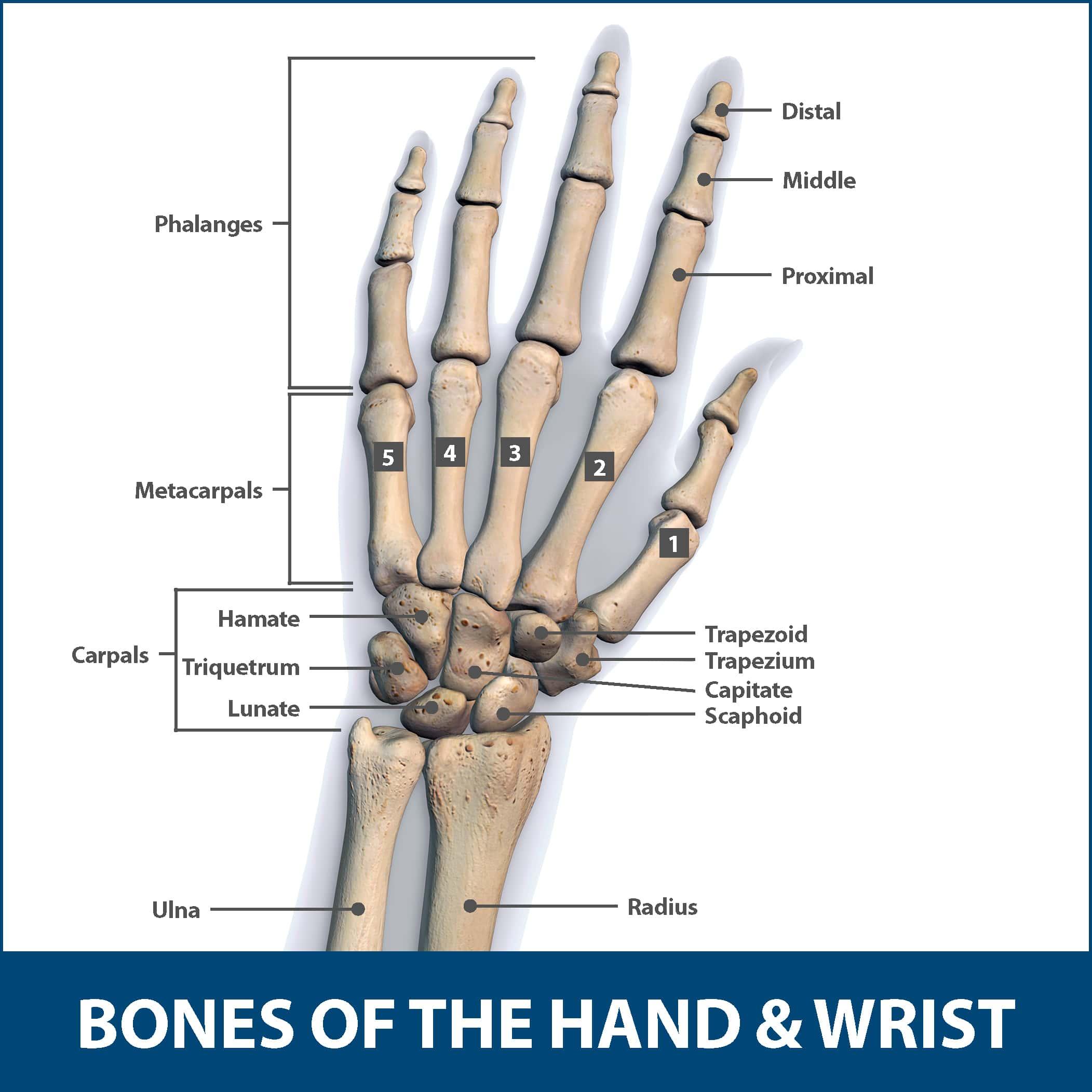 Wrist Fractures Information Florida Orthopaedic Institute