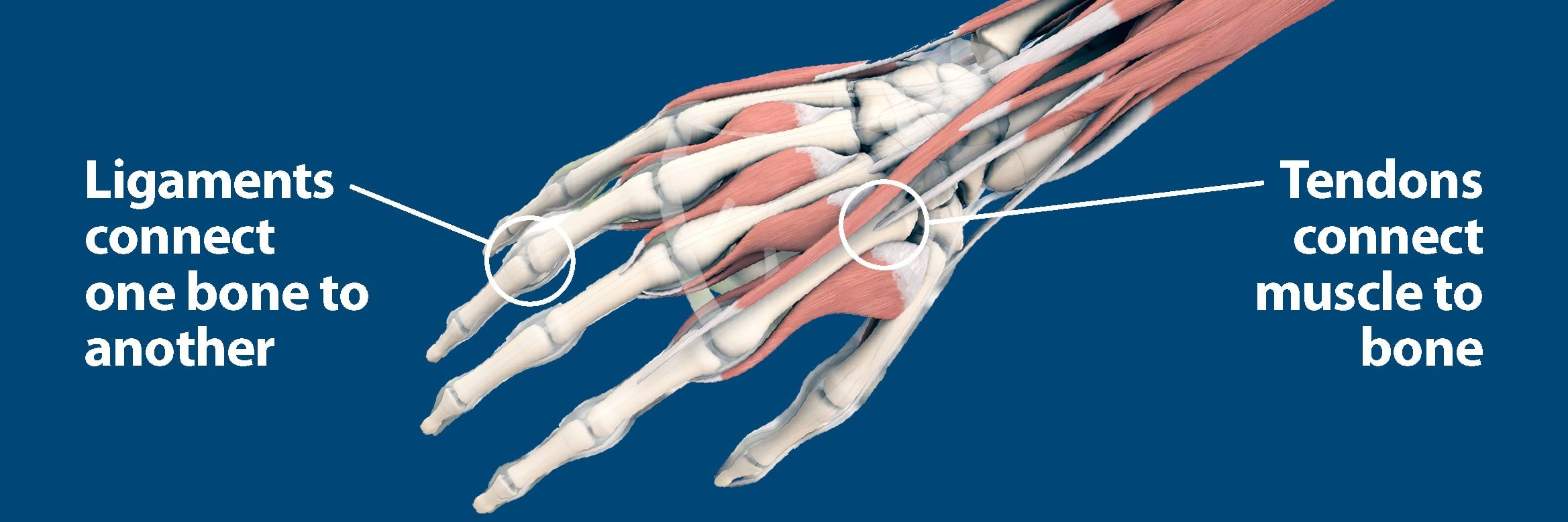 Sudden Acute Finger, Hand & Wrist Injuries