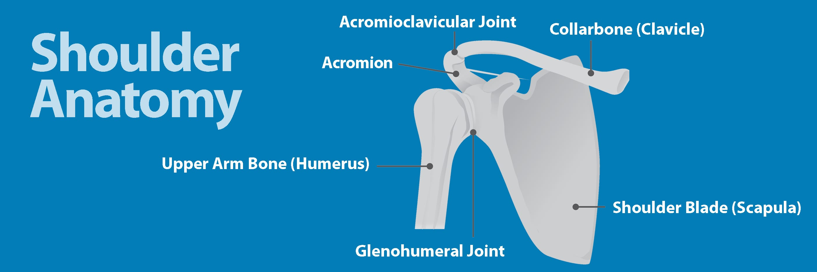 Broken Collarbone | Florida Orthopaedic Institute