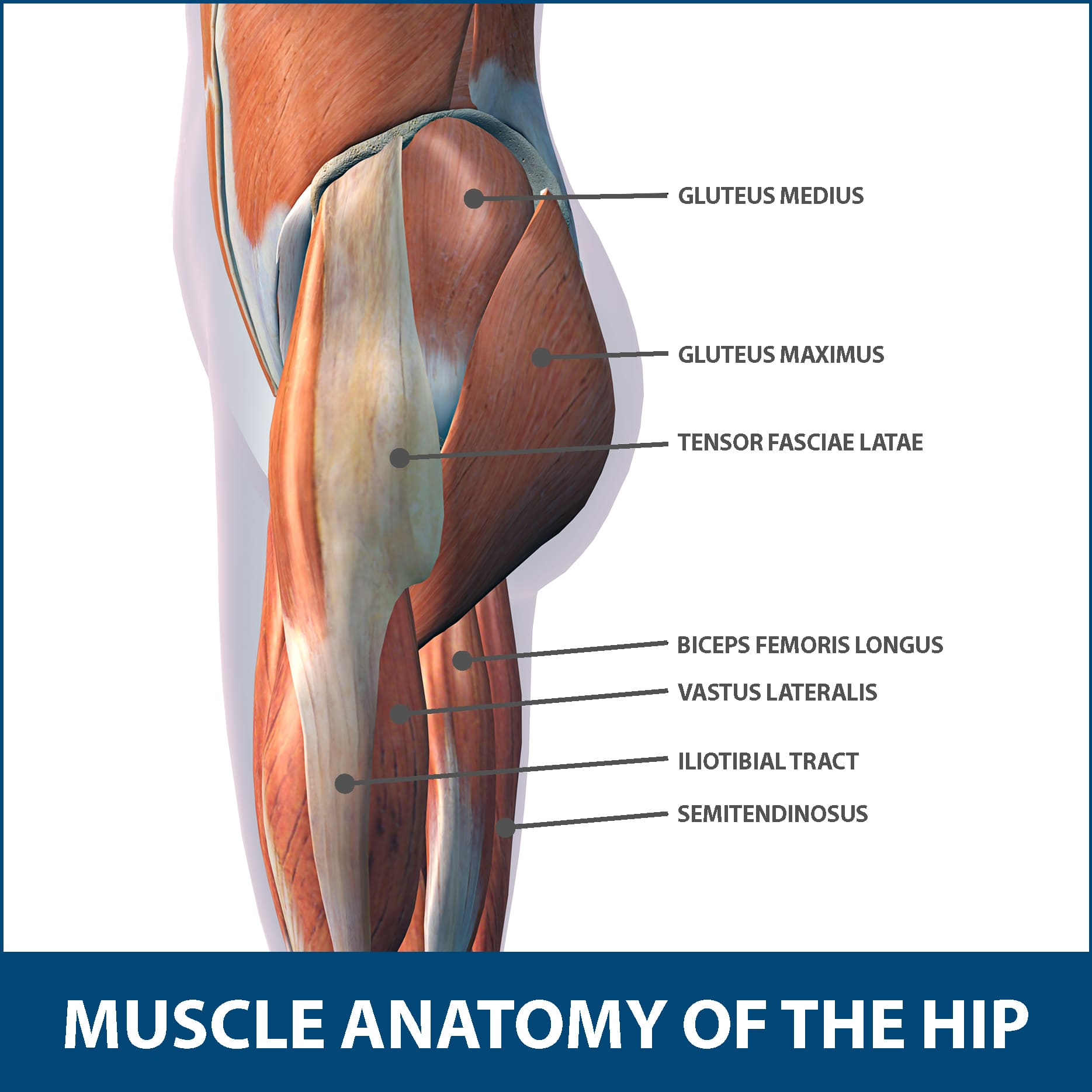 Hip Muscle Strains Anatomy