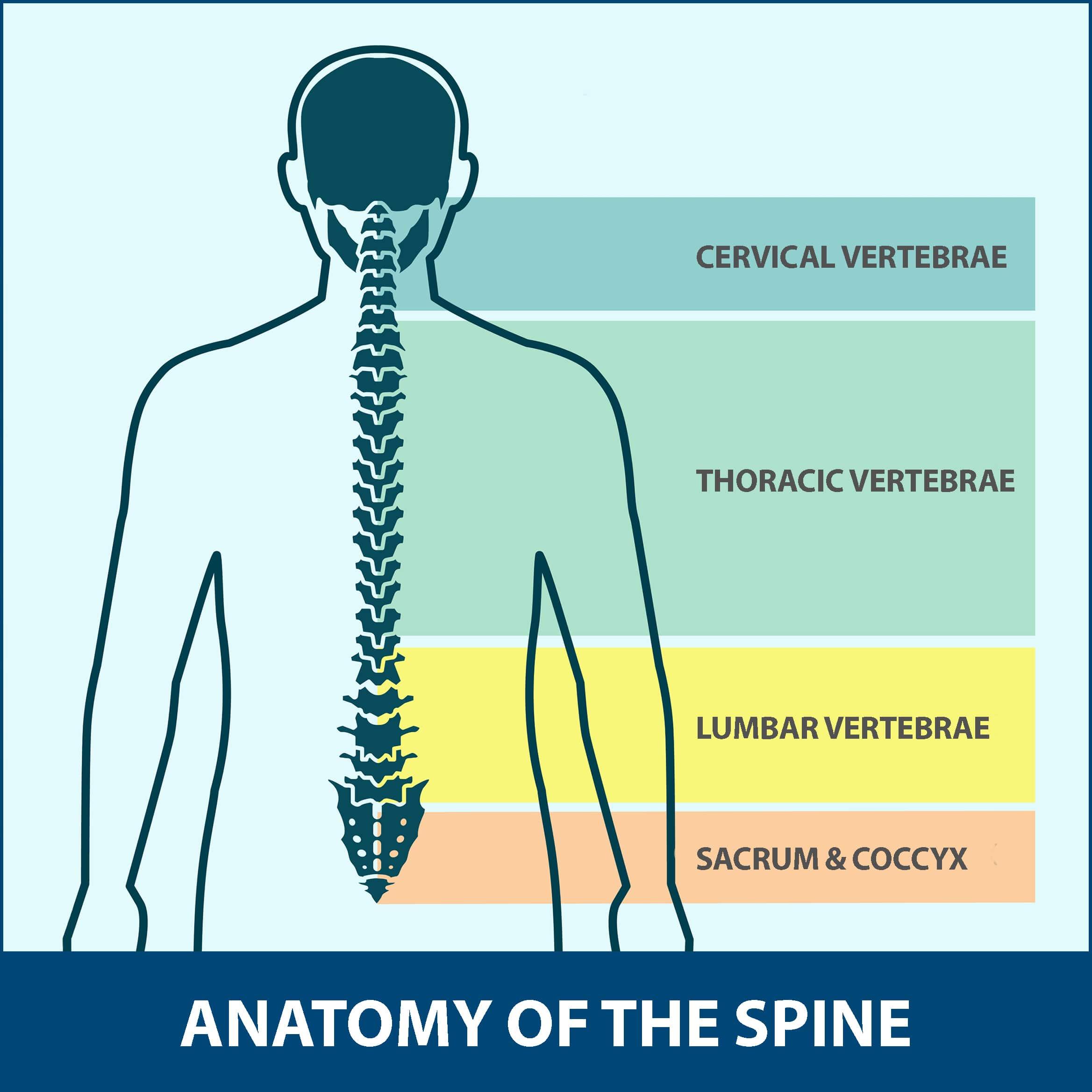 Diffuse Idiopathic Skeletal Hyperostosis Anatomy of Spine