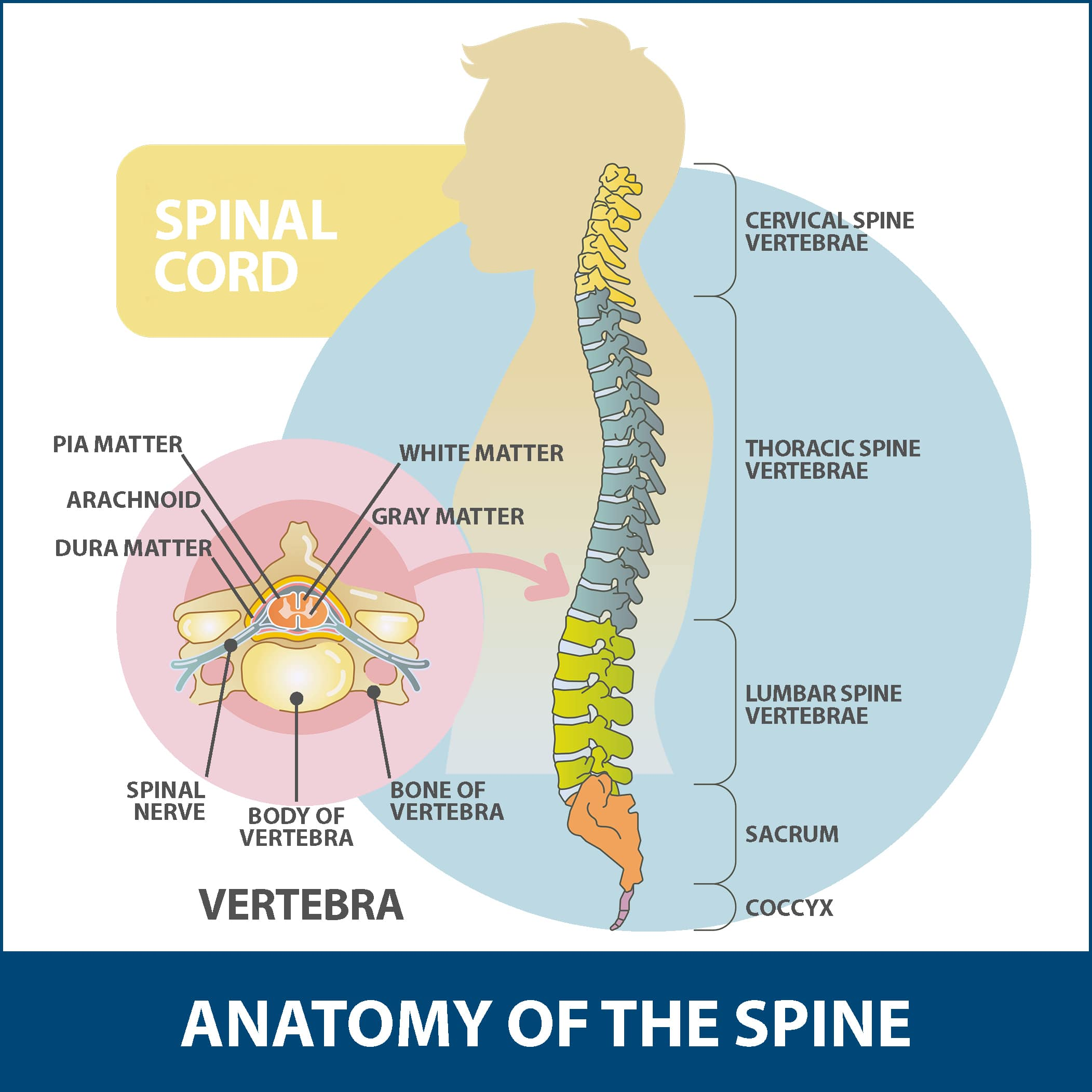 Spondylolisthesis Info Florida Orthopaedic Institute