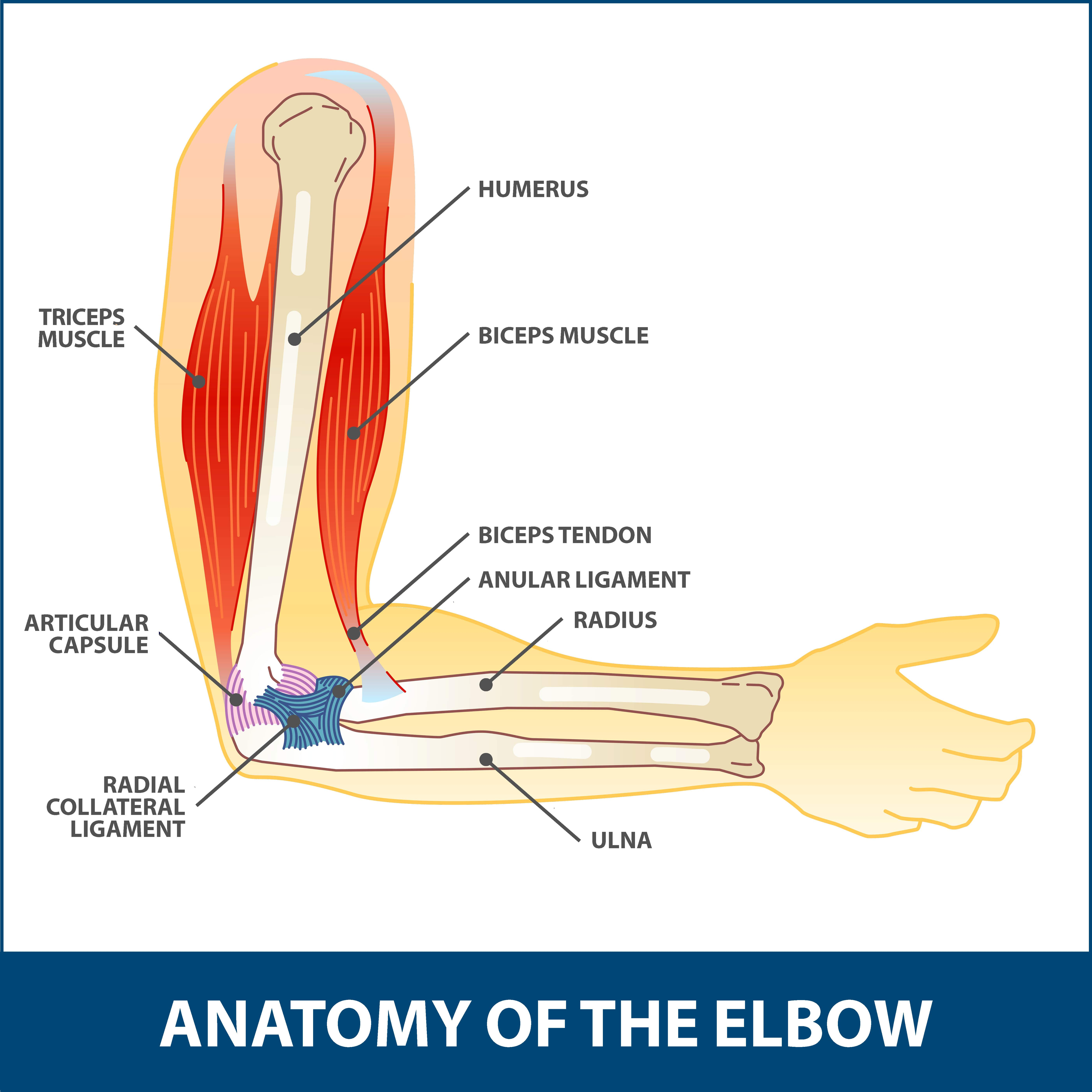 Arthroscopic Debridement Elbow Florida Orthopaedic Institute