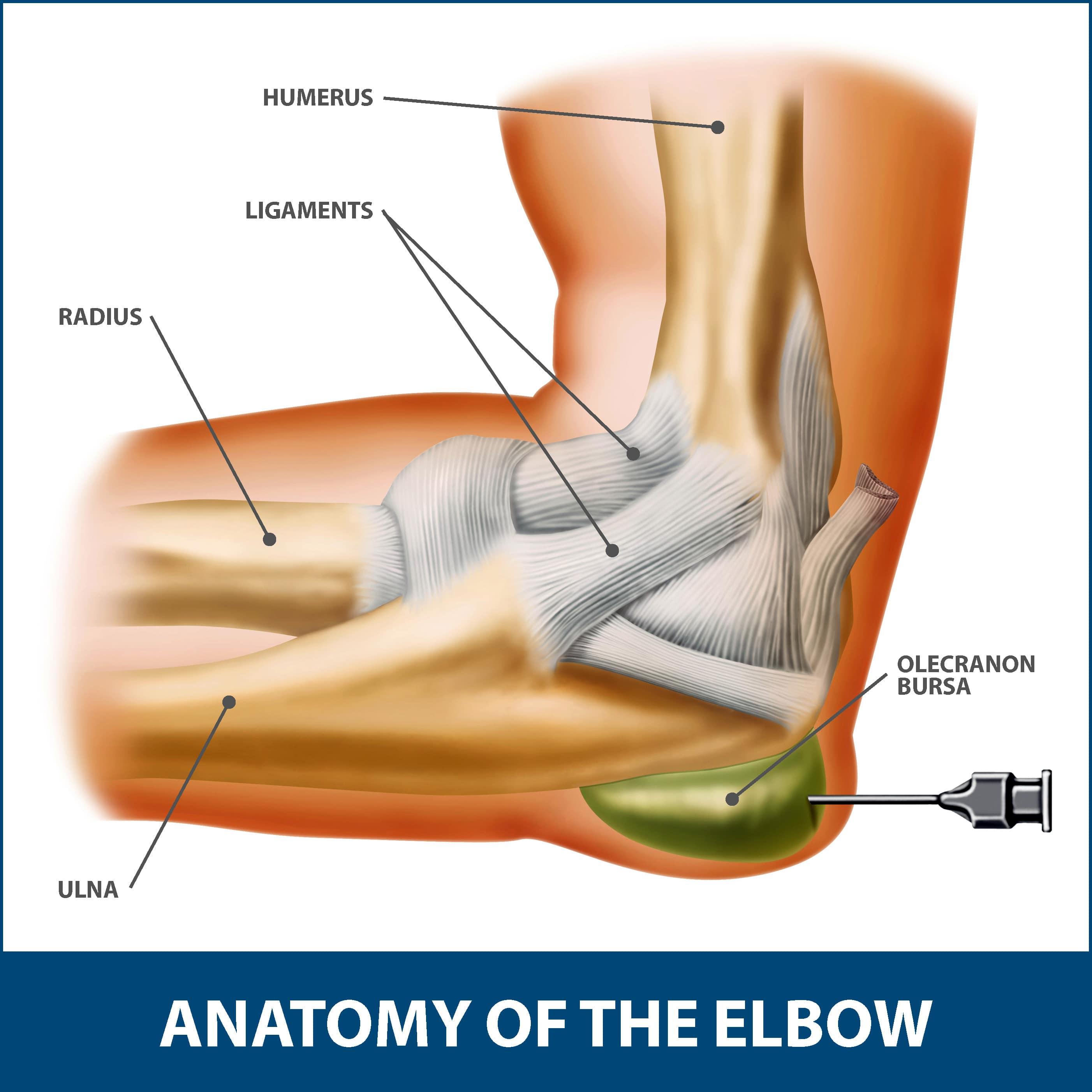 Elbow Bursitis anatomy of the elbow